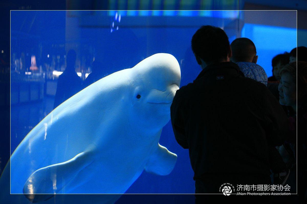 可爱海豚图片_表情大全