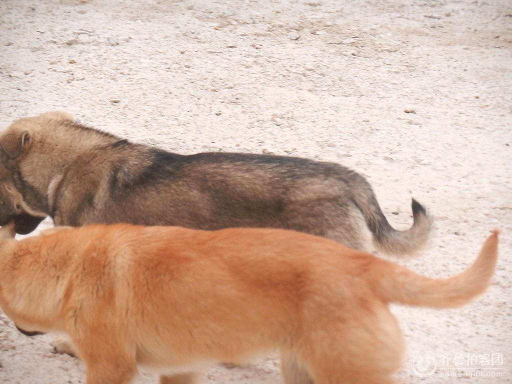 看看这对狗兄弟,多么和睦,动物都知道礼让,亲情的可贵,那些不孝敬