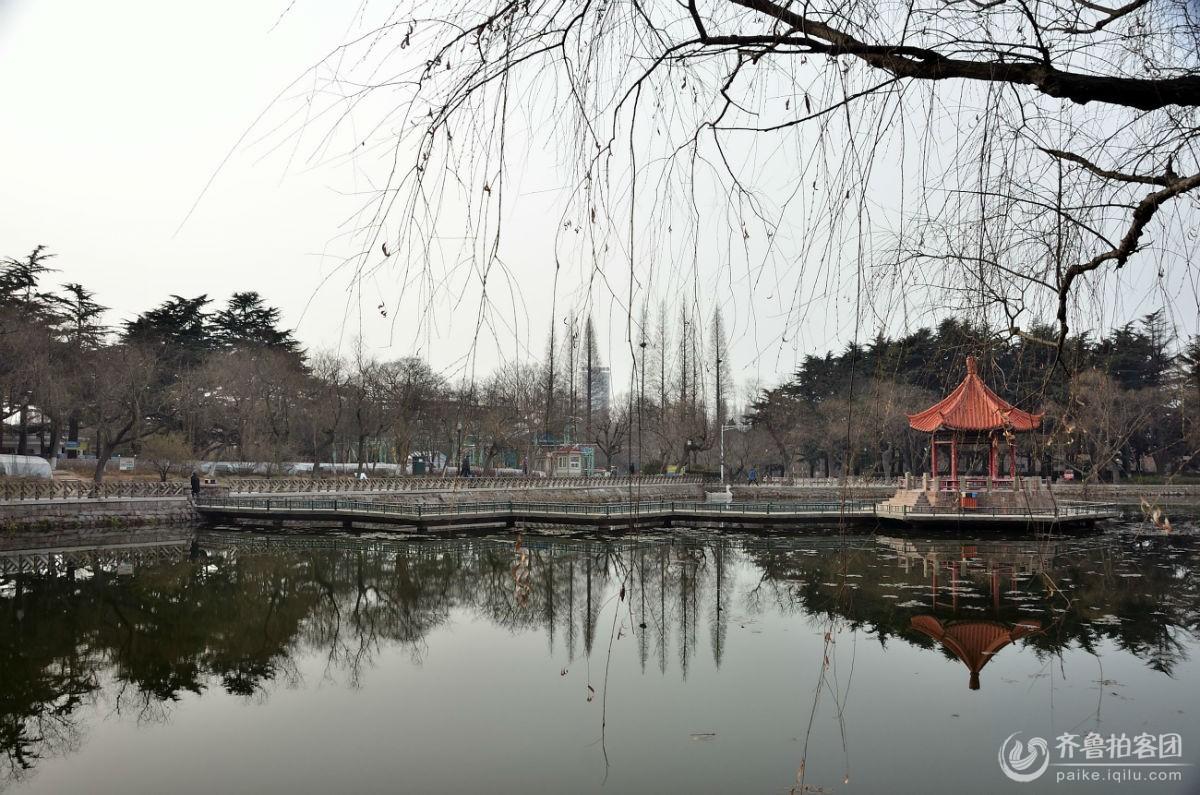初春随手拍 - 青岛拍客 - 齐鲁社区 - 山东最大的城市