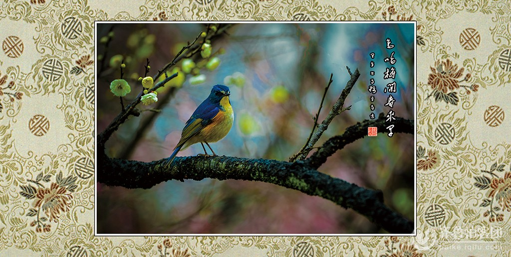鸟鸣梅开春来早