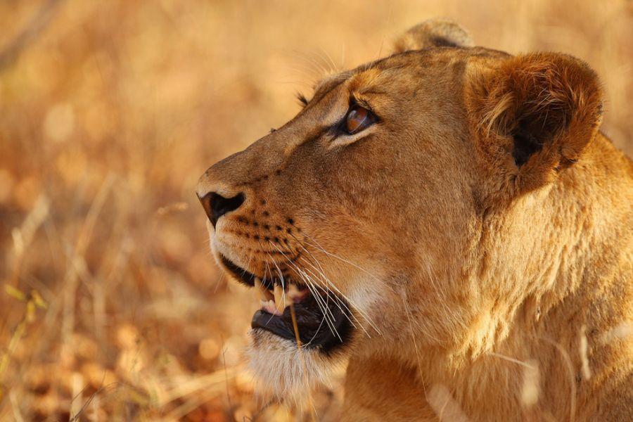 南非野生动物园[29p] - 社区图酷 - 齐鲁社区 - 山东