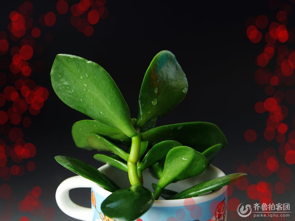 盆景 盆栽 植物 1024_768