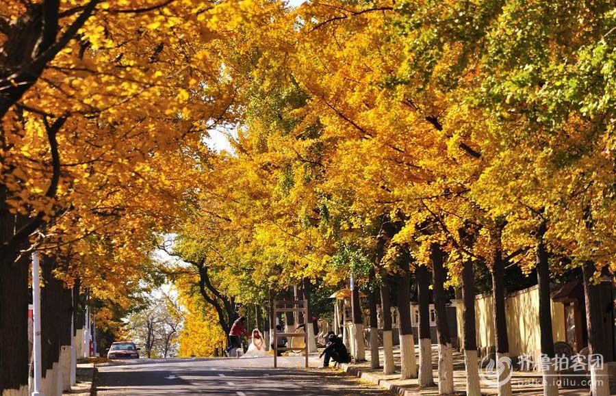 我爱大青岛之八大关风景区