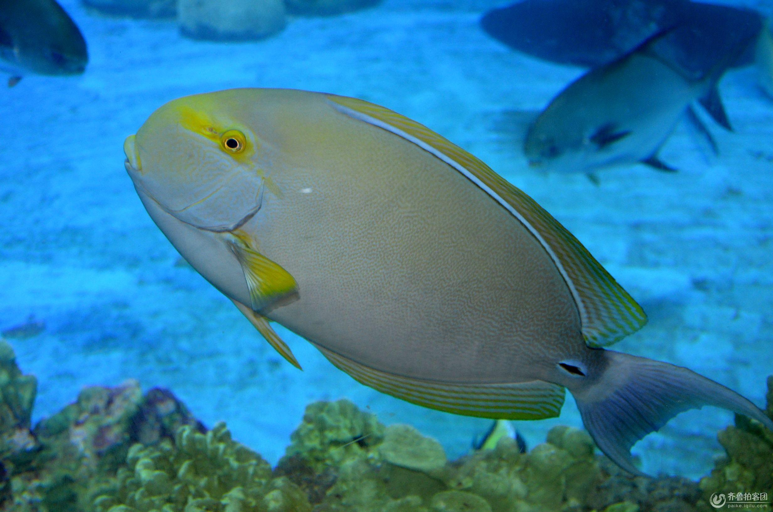 青岛海昌极地海洋世界平时的动物表演都有哪些?