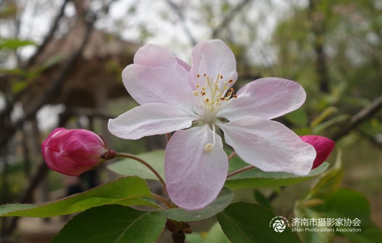 69 济南市摄协官方论坛 69 省直 69 海棠花  分享到:qq空间新浪