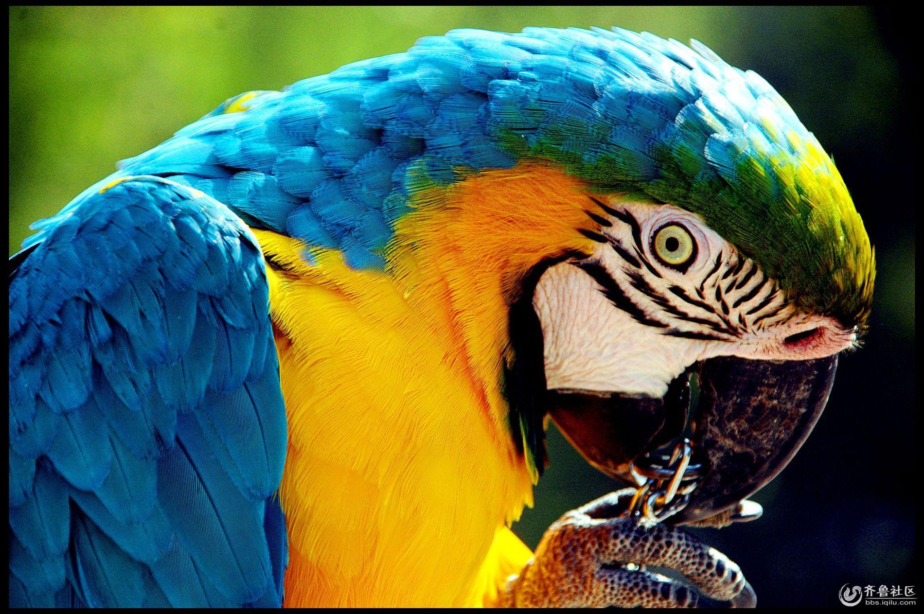 鹦鹉,济南跑马玲野生动物世界