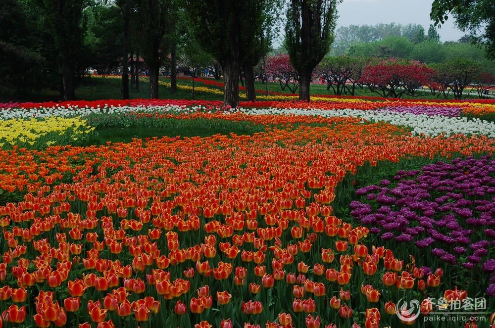 回首北京植物园 - 滨州拍客 - 齐鲁社区 - 山东最大的