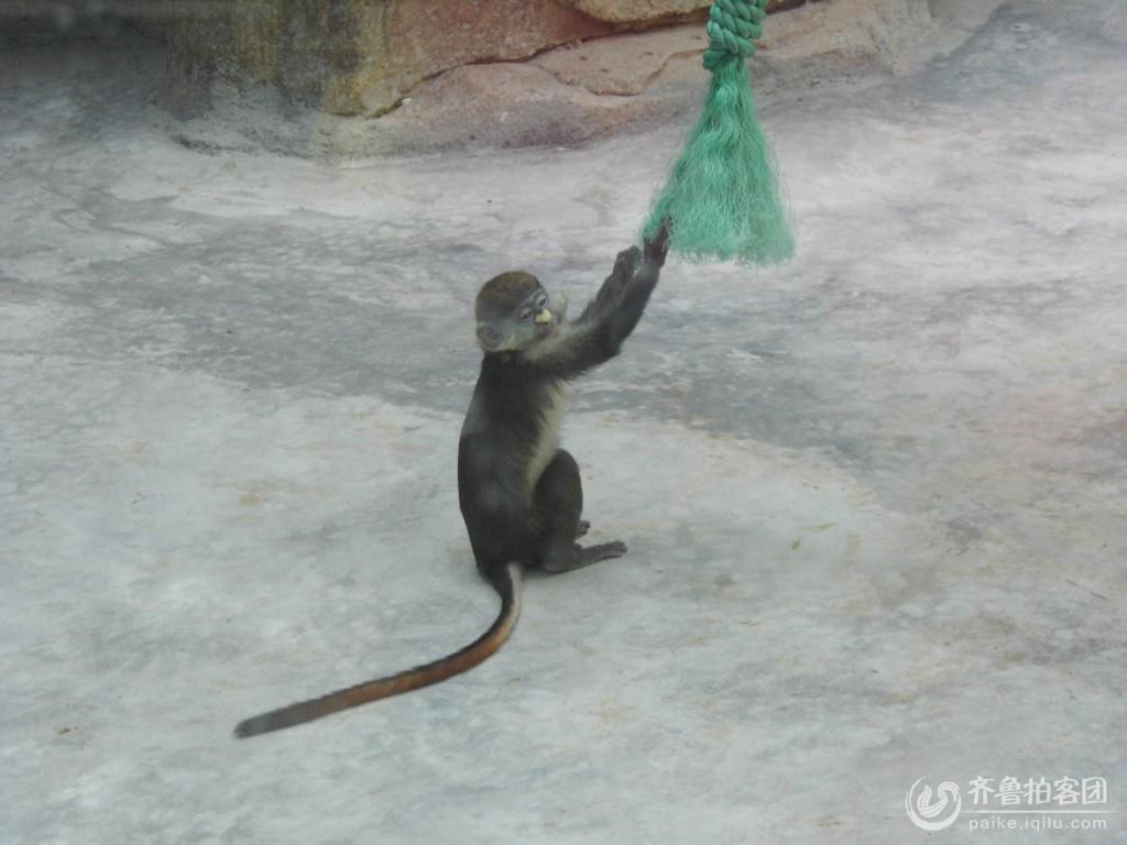 可爱的小猴子 - 东营拍客