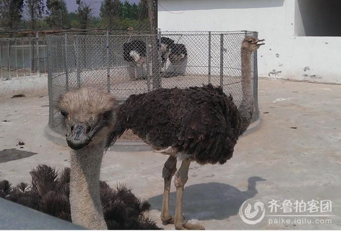 羊山野生动物园部分动物一览