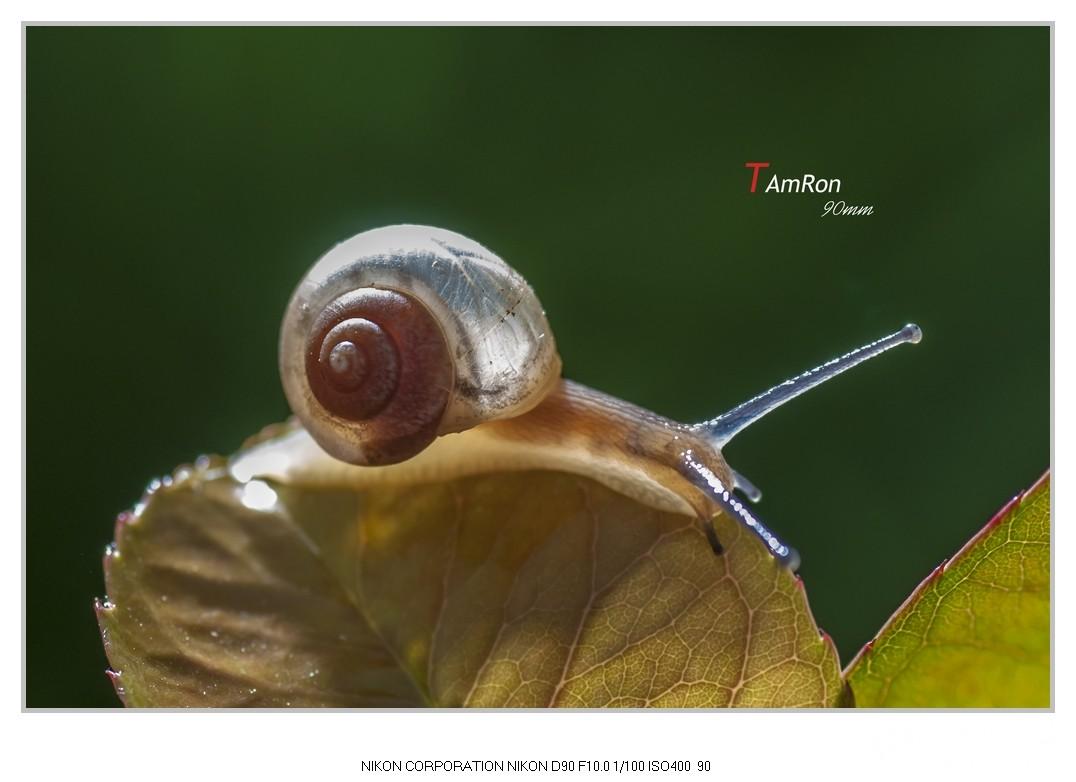 奔跑的蜗牛蛇吞鳄鱼被撕裂图片