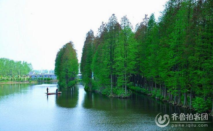 江苏兴化水上森林公园图片