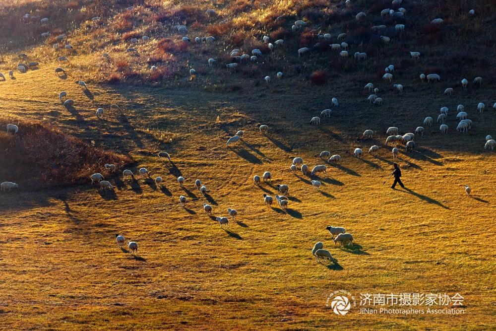 07.坝上牧羊图〔摄影:王亮朝〕.jpg