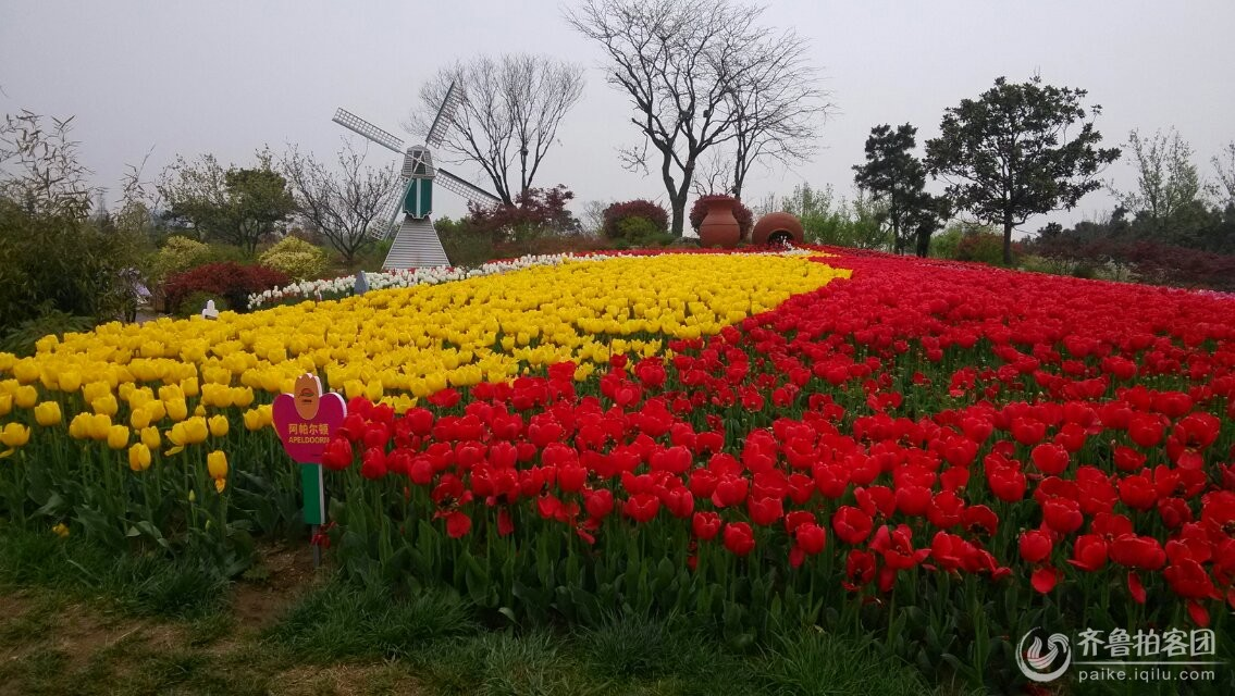 日照植物园 郁金香盛开的季节