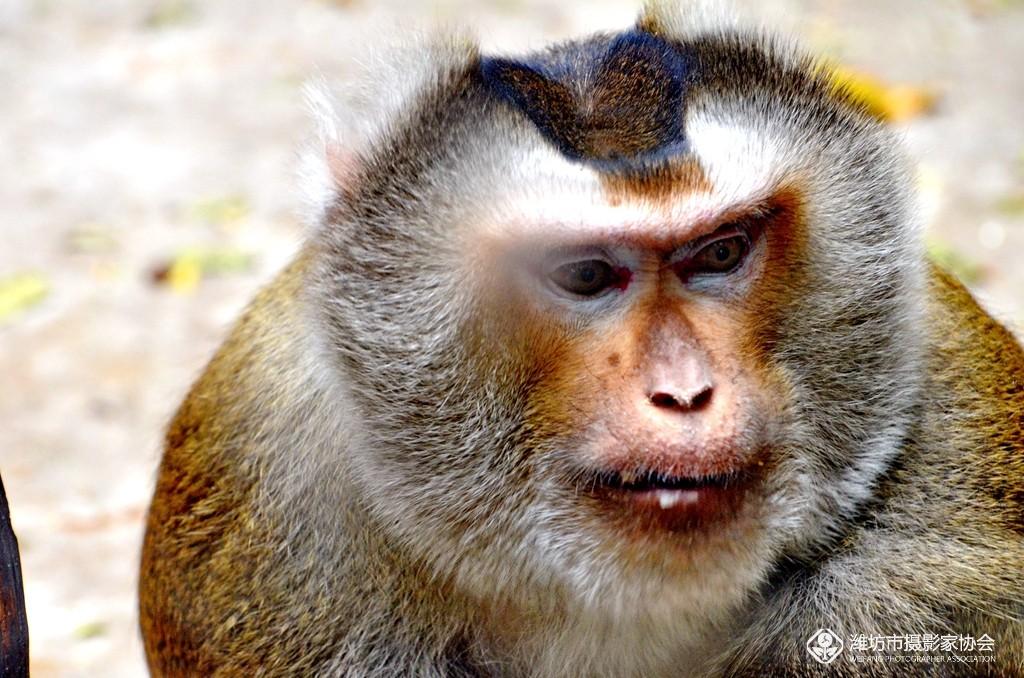 成群可爱猴子图片
