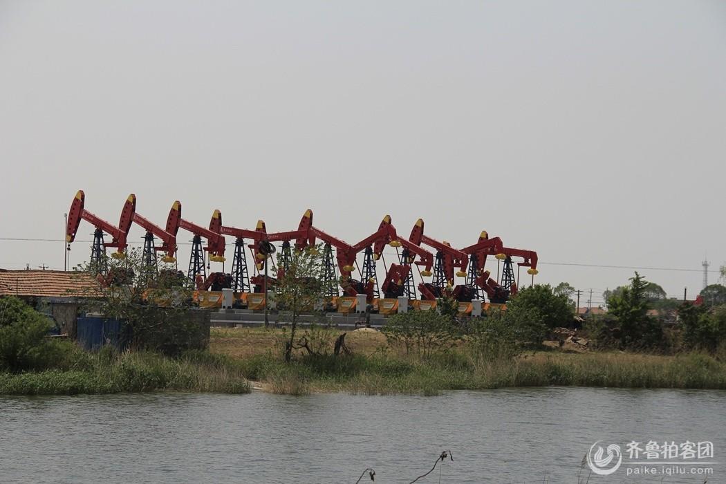 孤岛美景 - 东营拍客 - 齐鲁社区 - 山东最大的城市