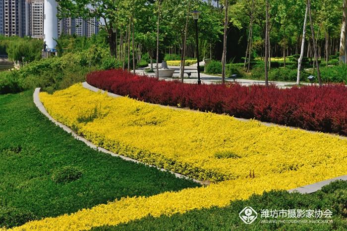 69 潍坊市摄协官方论坛 69 奎文区摄影家协会 69 植物园里的