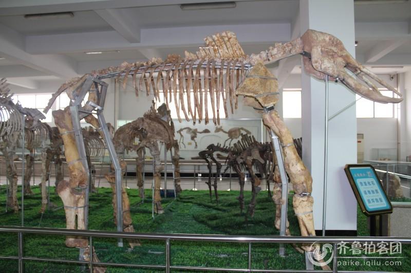 平邑自然博物馆的骨头架子
