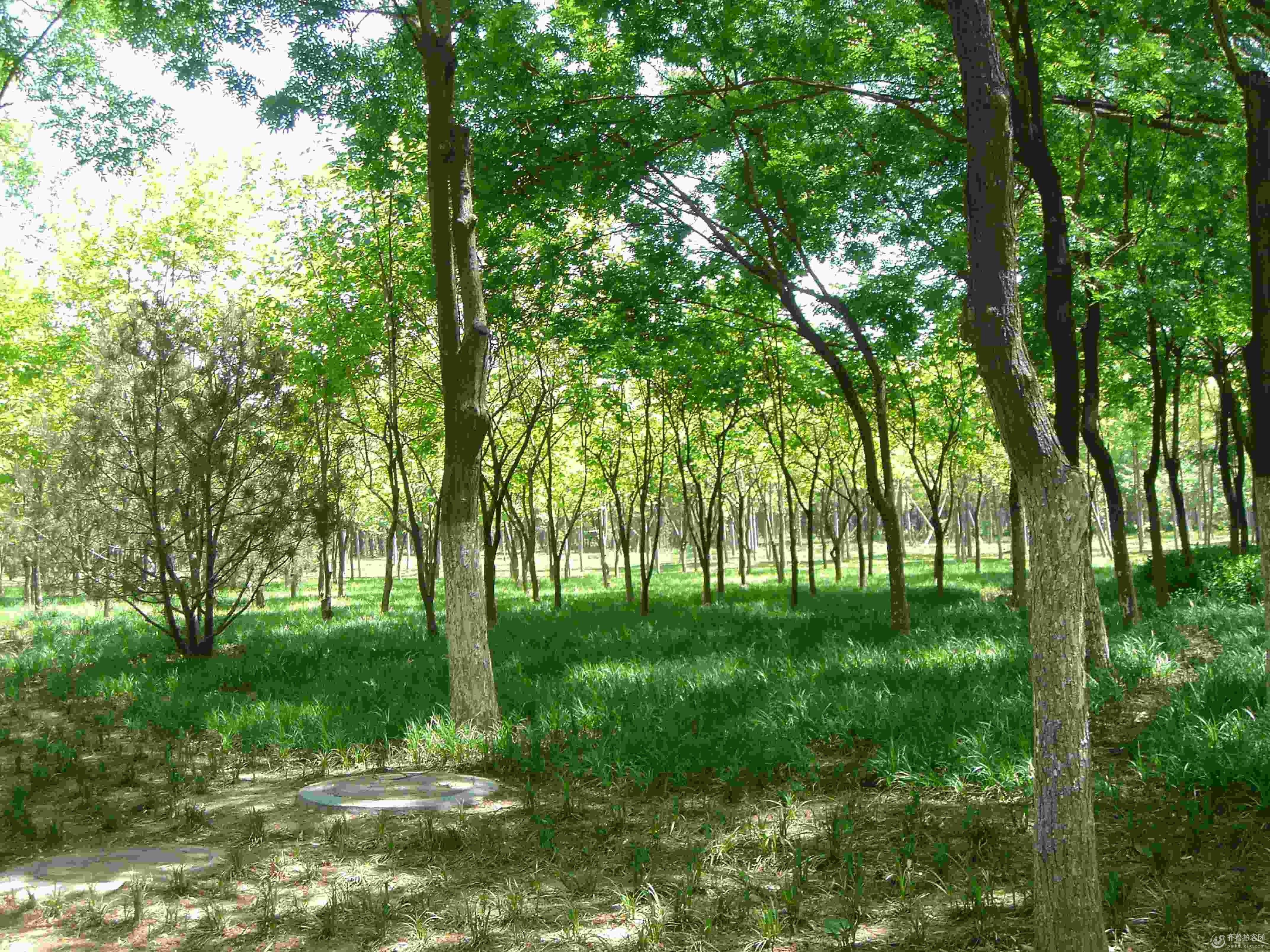静静的小树林