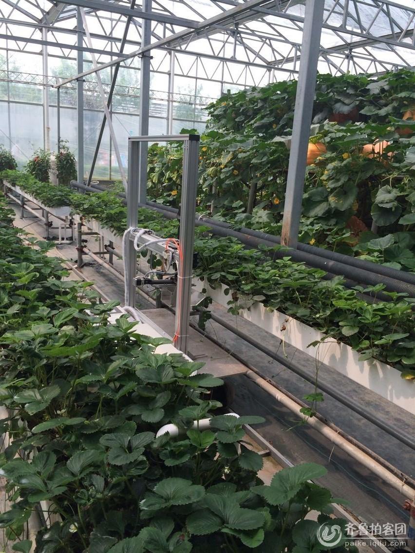 草莓采摘机器人 山东最大的城市生活社区,山东广播电视台官方社区