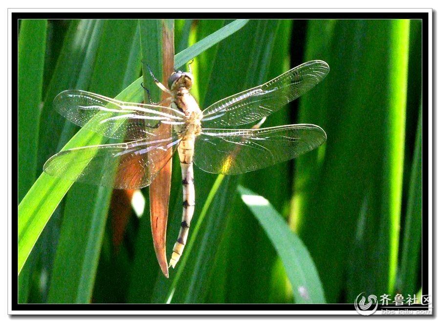 蜻蜓的成长史,小拍