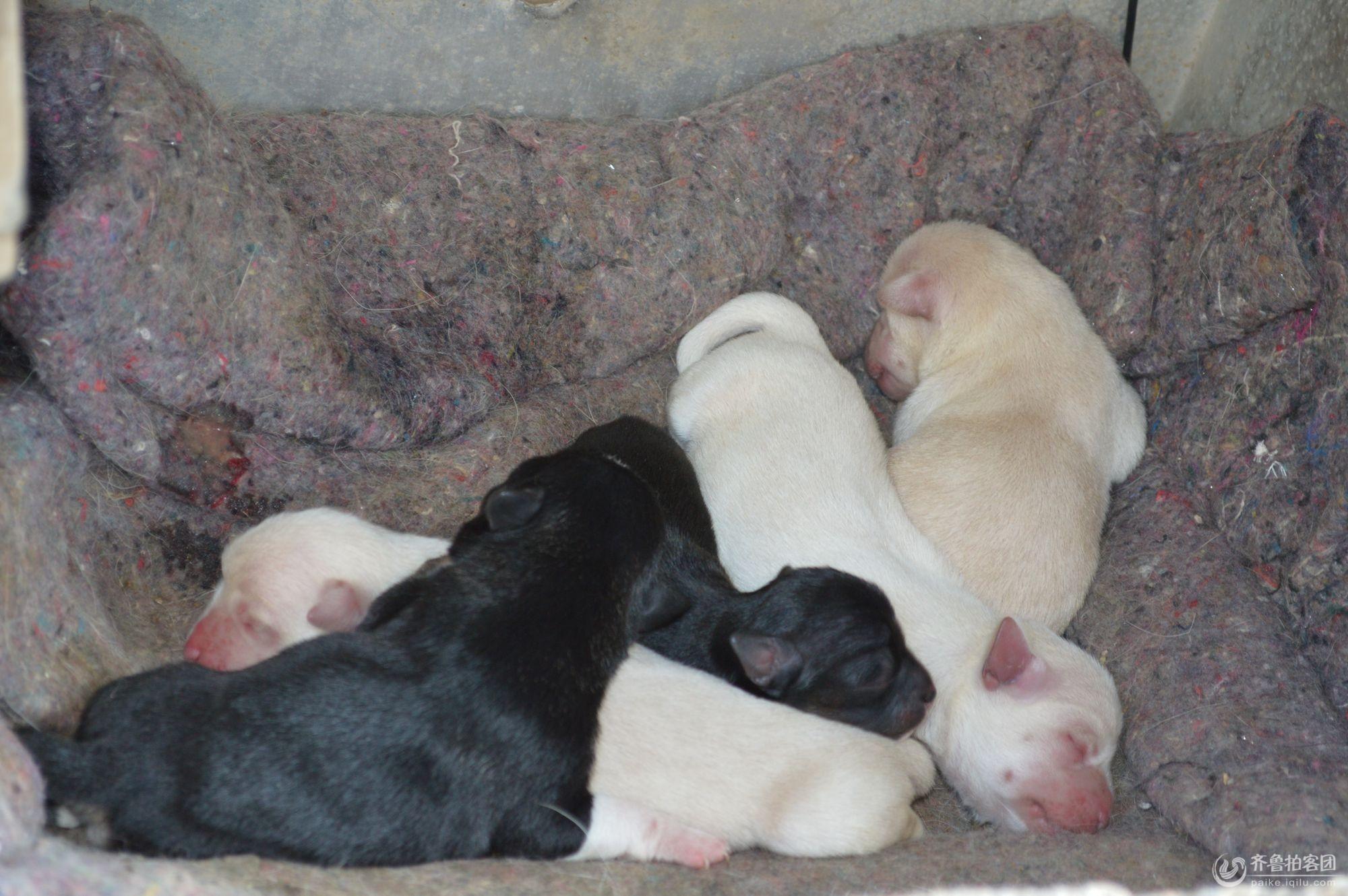 刚出生的小狗崽 - 东营拍客