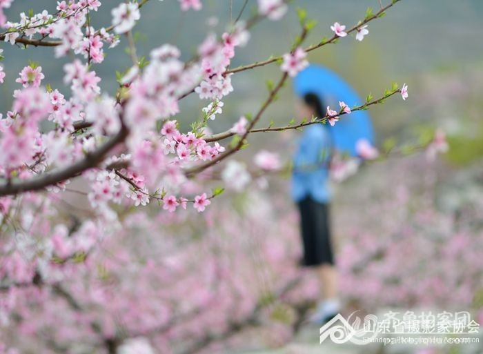 梦中可有桃花的私语