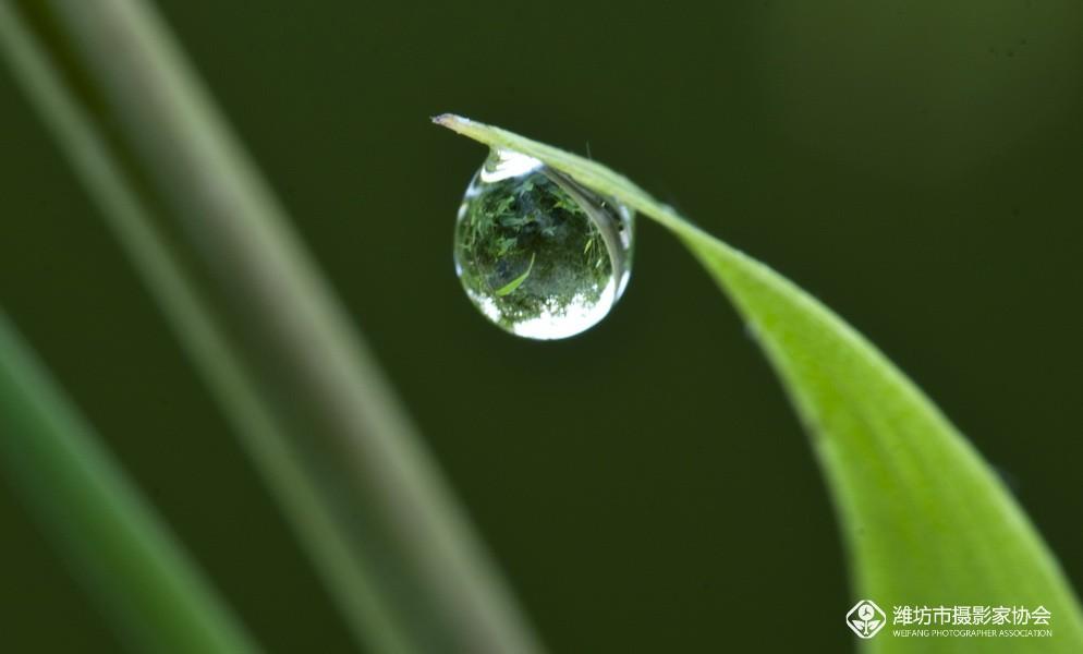 微信头像绿叶滴水