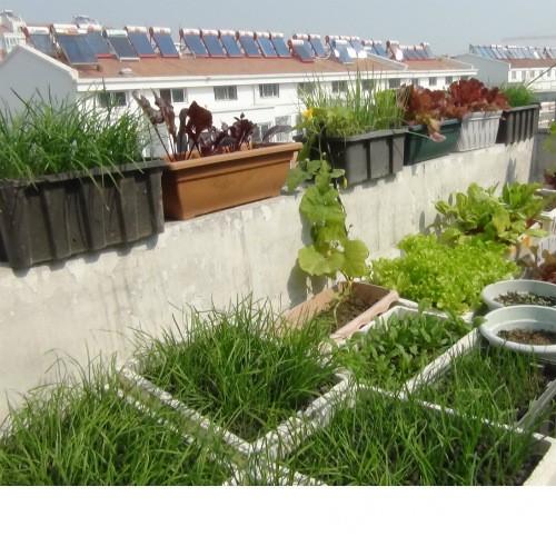 楼顶菜园 - 济宁拍客 - 齐鲁社区 - 山东最大的城市