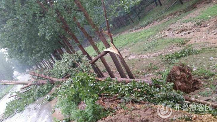 苗山镇东邢村遭遇降雨及风