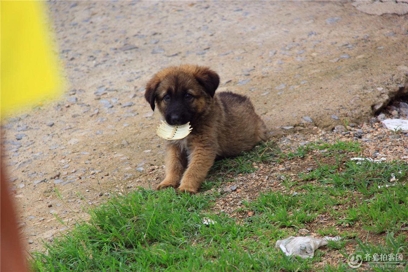 论坛 69 齐鲁拍客团 69 济宁拍客 69 可爱的小狗  分享到:qq
