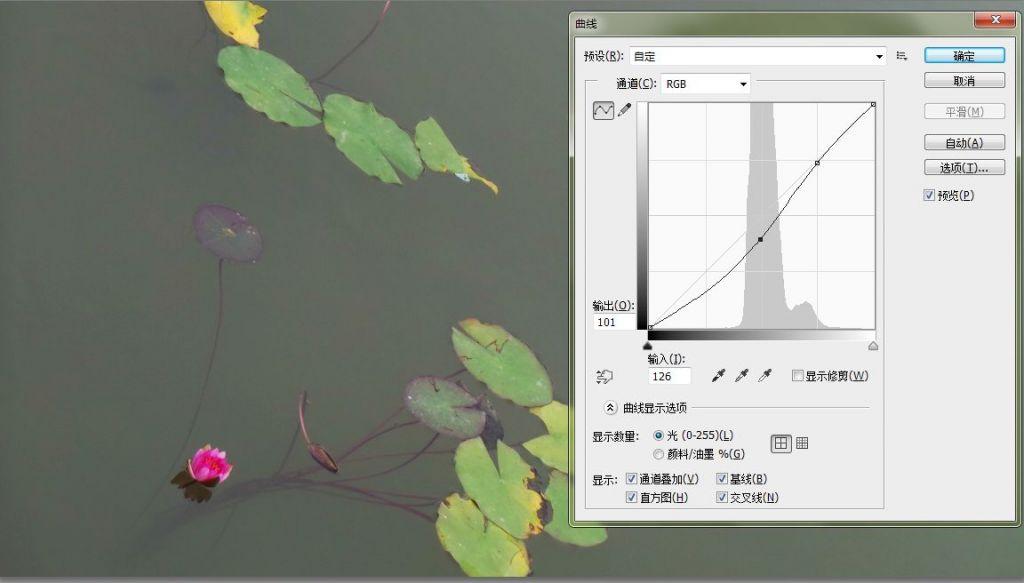 曲线01.jpg