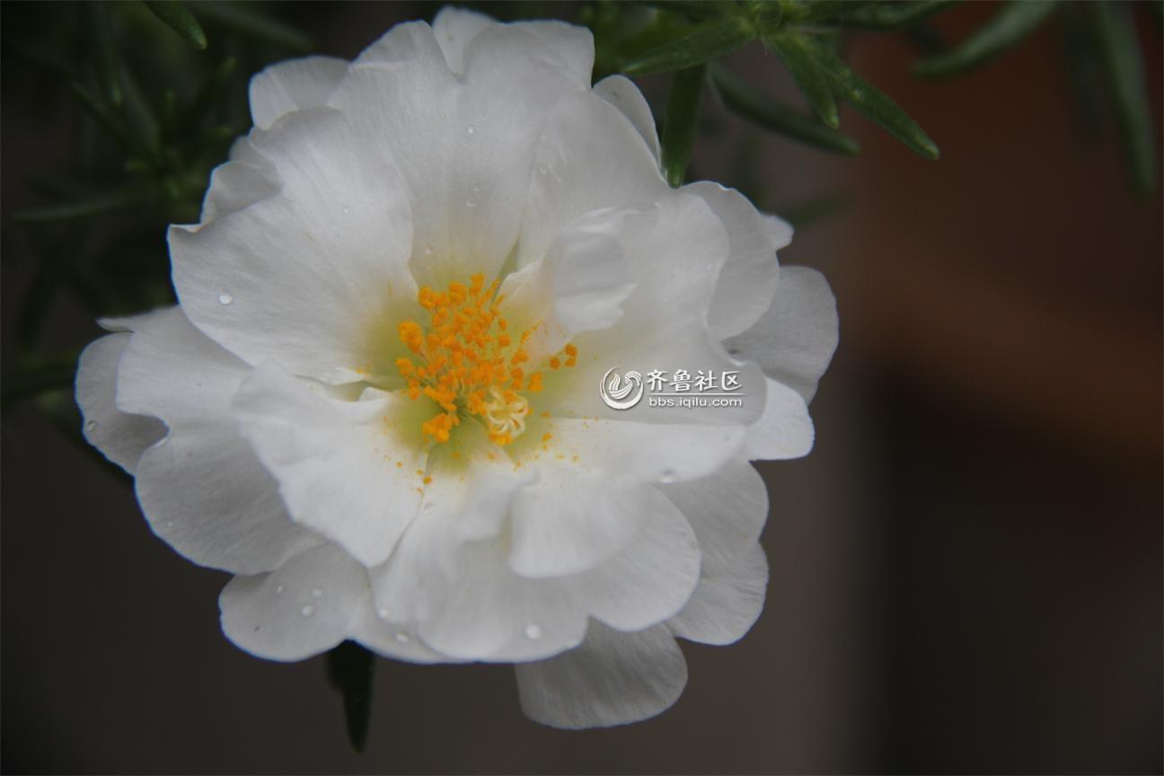 69 雨后的花朵  分享到:qq空间新浪微博腾讯微博人人网微信qq好友