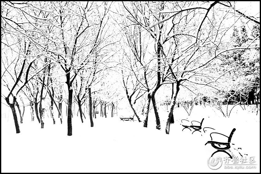 黑白线条的韵律(雪后的千佛山公园)