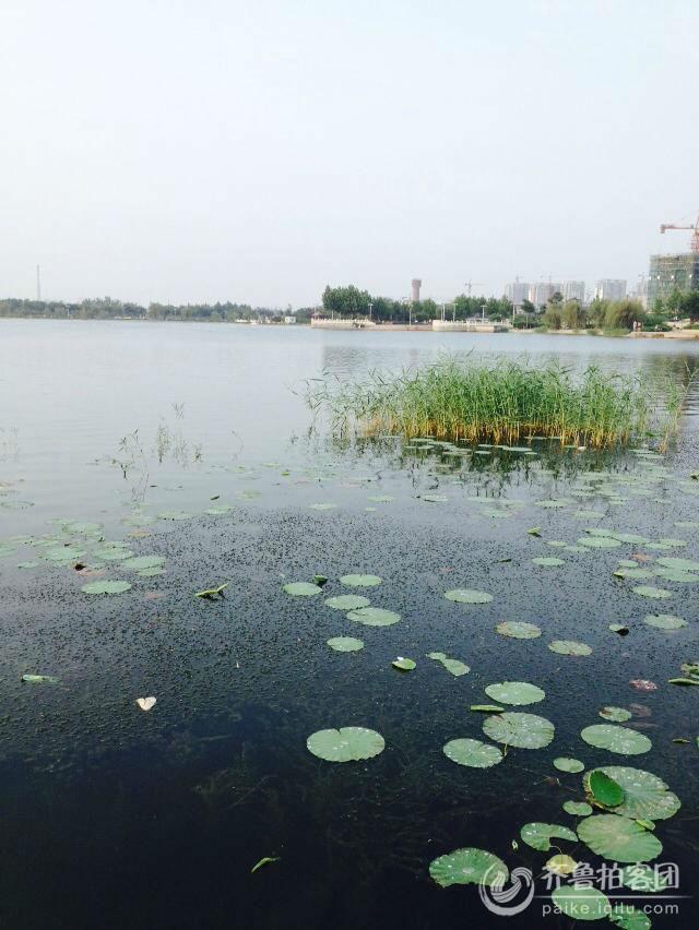 夏津龙湖公园