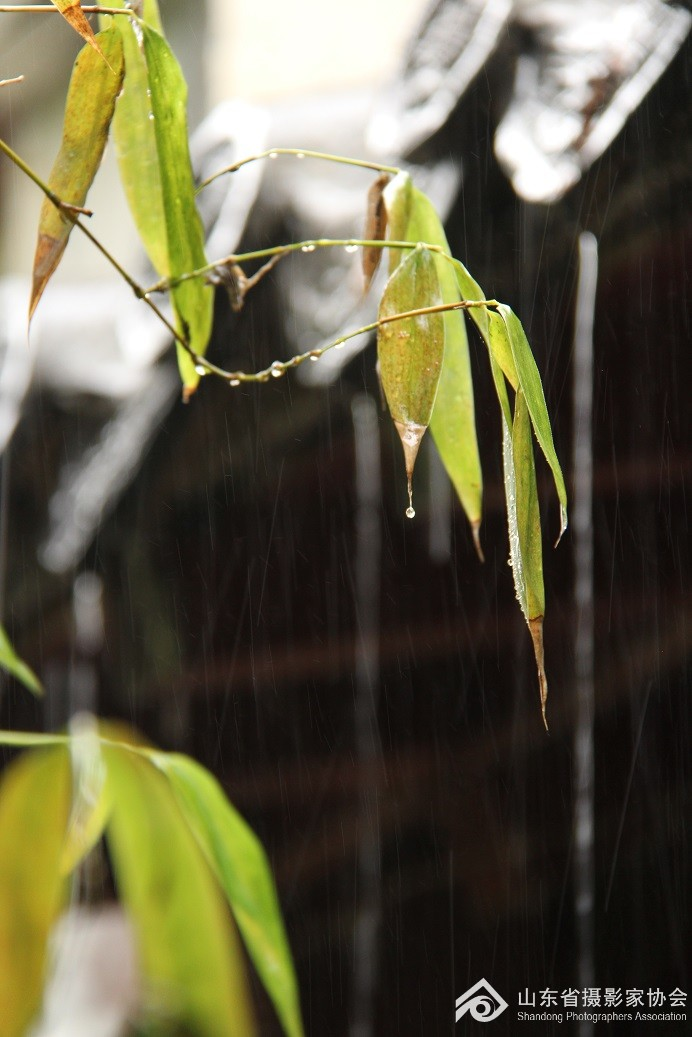 手机动态雨景壁纸