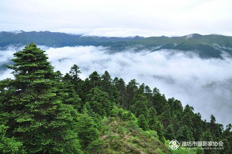西藏鲁朗林海