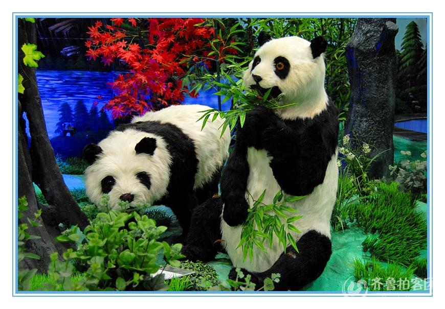 壁纸 大熊猫 动物 870_605