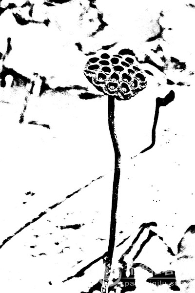秋的简笔画图片