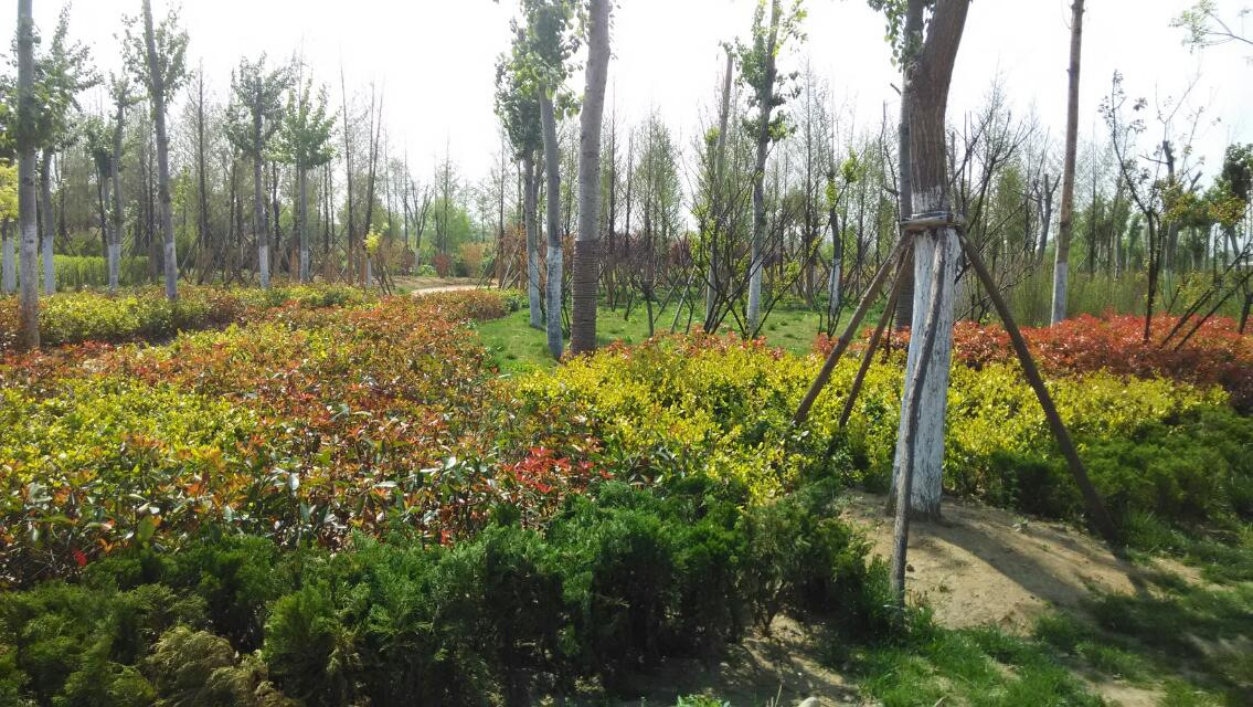 临沂动植物园 - 临沂拍客 - 齐鲁社区 - 山东最大的,.