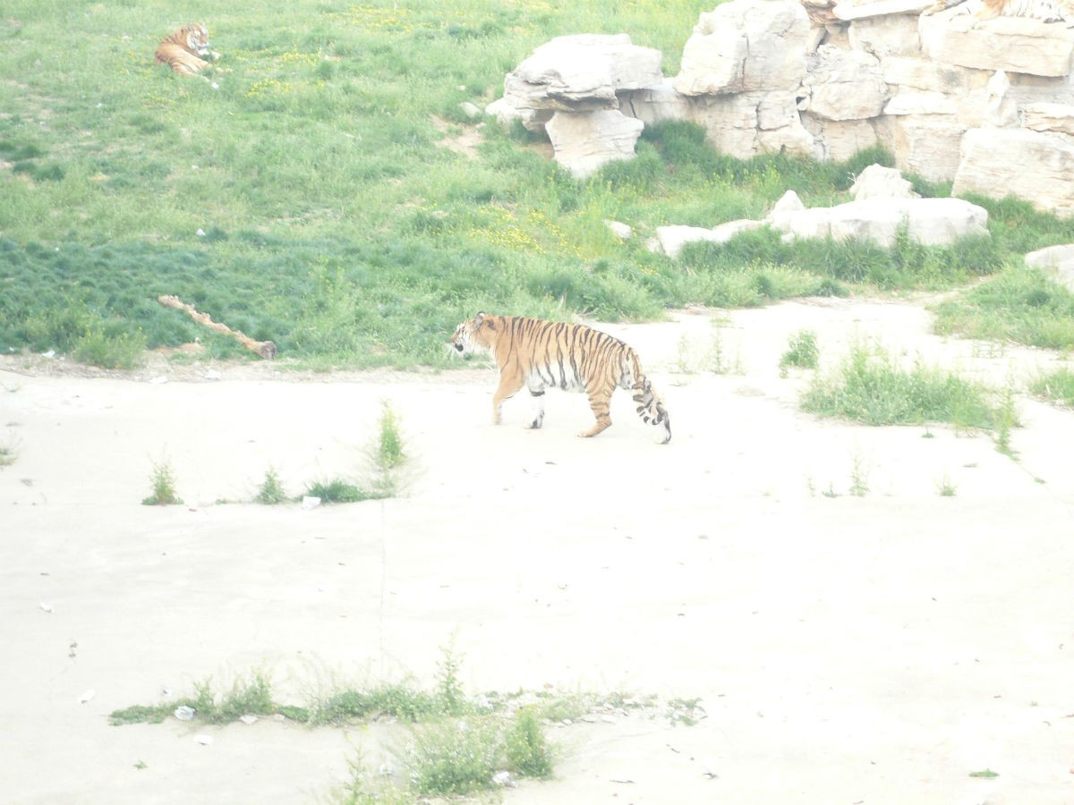 济南野生动物园留念 - 济宁拍客 - 齐鲁社区 - 山东最