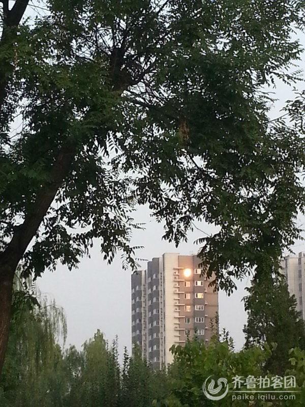 树窗矢量图
