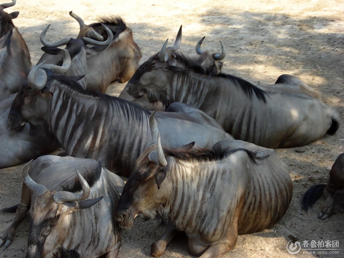 泰国的动物园