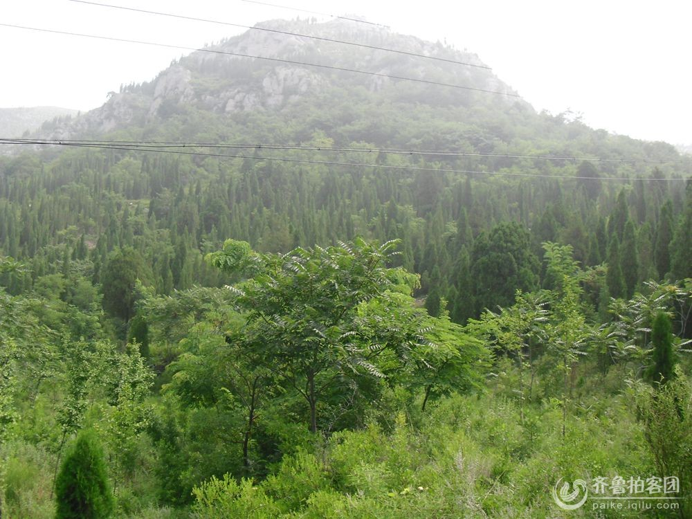 泗水县青龙山国家森林公园首届菊花会