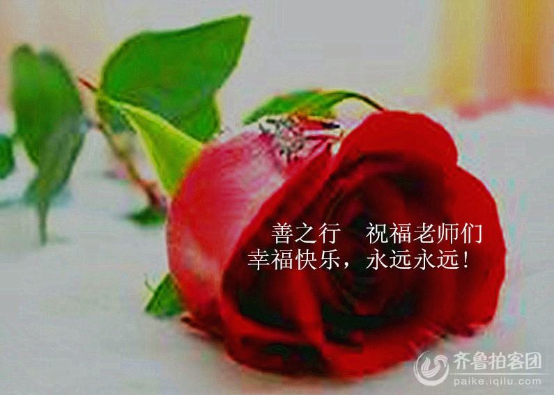 高清微信头像玫瑰花图片大全
