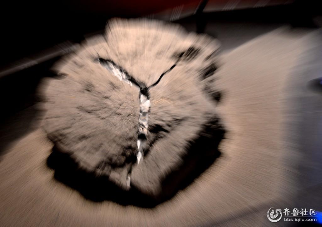 壁纸 动物 猫 猫咪 小猫 桌面 1024_721