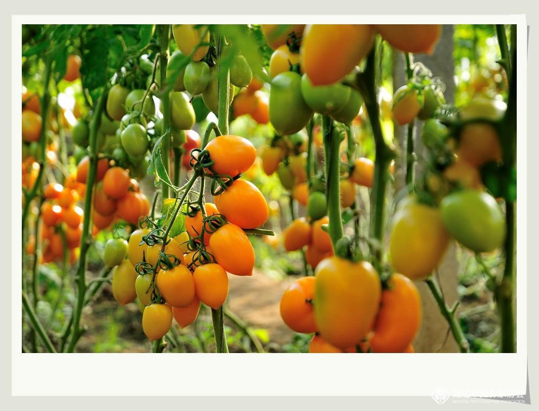 蔬菜大棚里的冬天 - 鸟类动植物