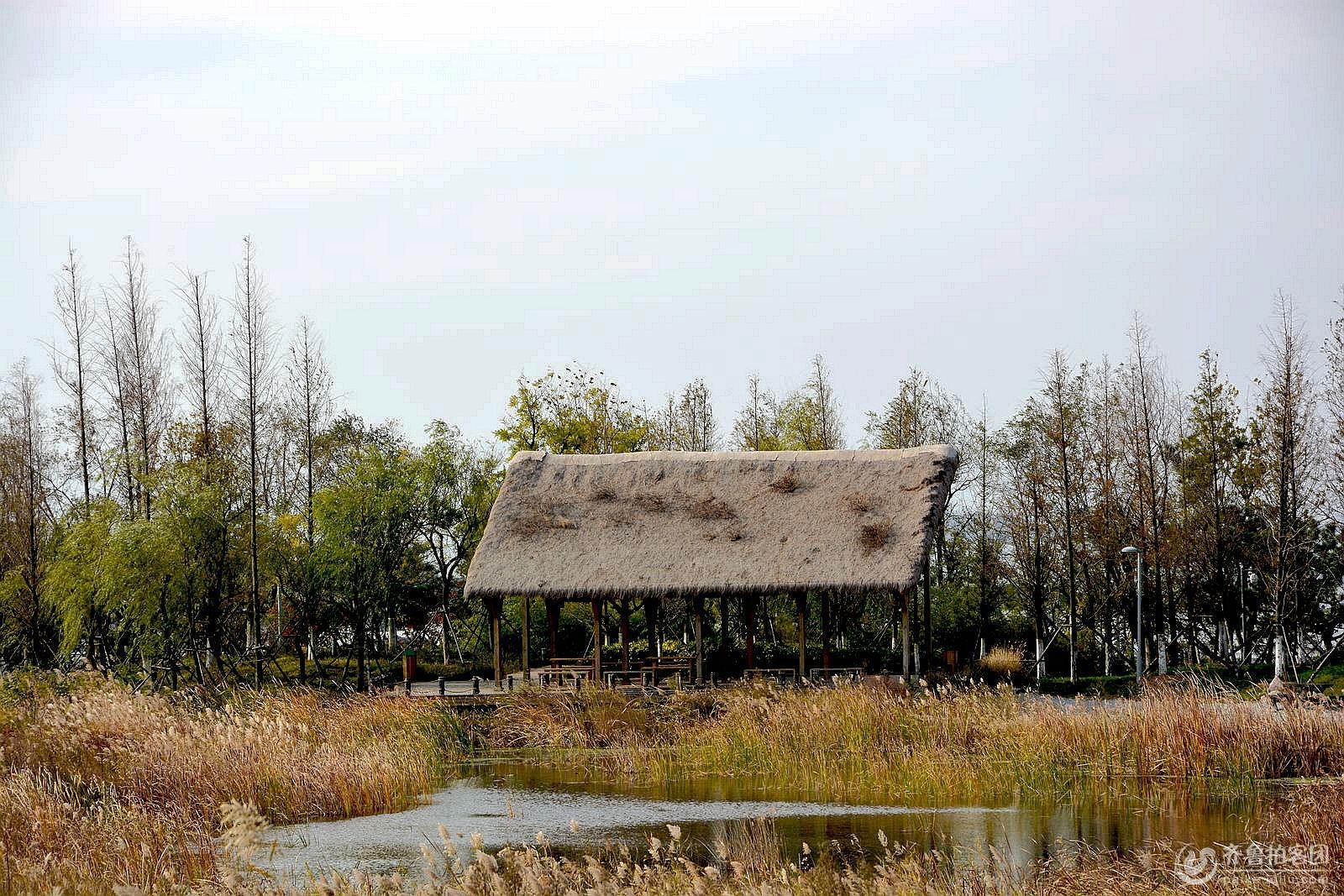唐岛湾湿地公园美如画