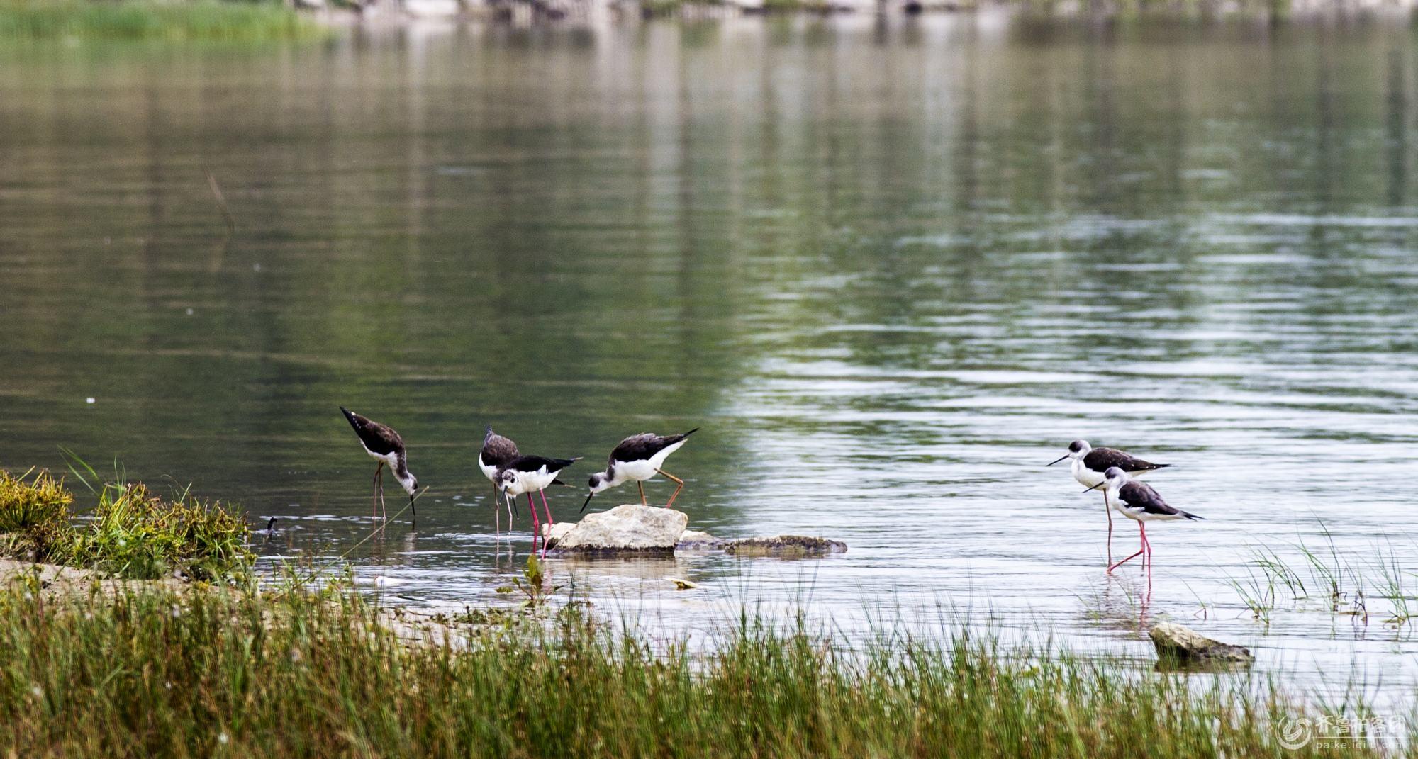 异龙湖濒危野生动物