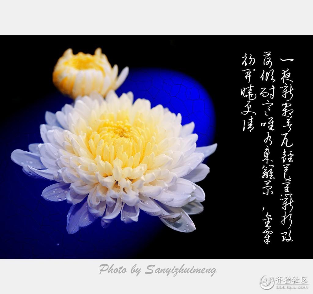 咏菊.jpg