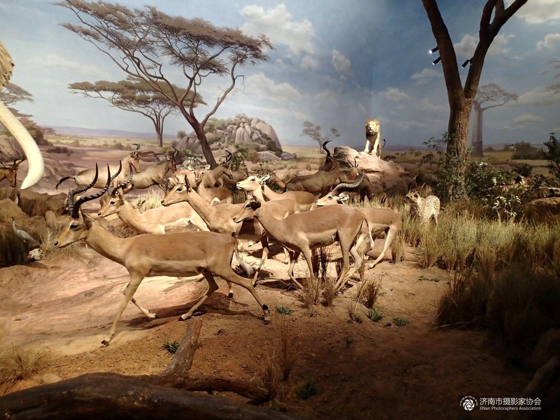-----非洲动物大迁徙
